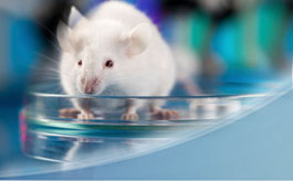 IACUC - Using Mice in Research course image