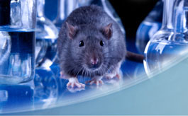 IACUC - Using Rats in Research course image